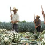 Tequila: Past, Present & Future