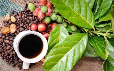 coffee-beans-1