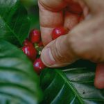 Τι είναι οι φρεσκοκαβουρδισμένοι καφέδες ή specialty coffees;